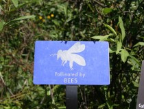 Pollinated by bees